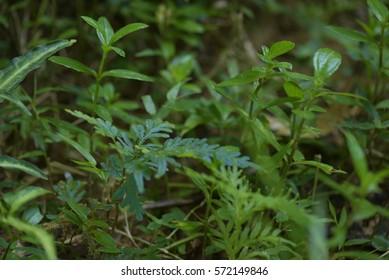 fern blue skin