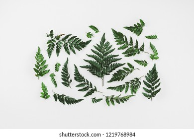 Fern branches knolled on white, eco lifestyle concept