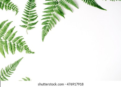 fern branches pattern isolated on white background. flat lay, top view