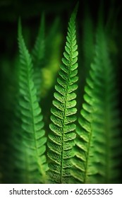 Fern branches, selective focus