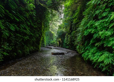 Fern Canyon in Prairie Creek Redwoods State Park, California, USA