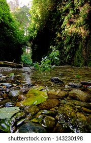 Fern Canyon, Prairie Creek Redwoods State Park - Humboldt County, California