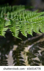 fern casting shadows