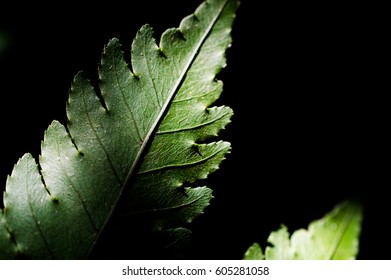 the fern foliage with isolated on black background