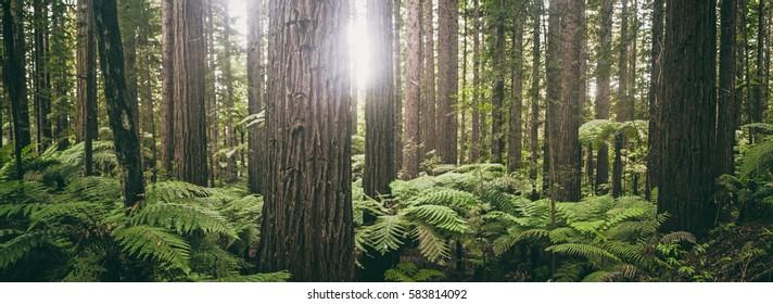 Fern forest in New Zealand