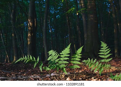 Fern in the forest in the sun