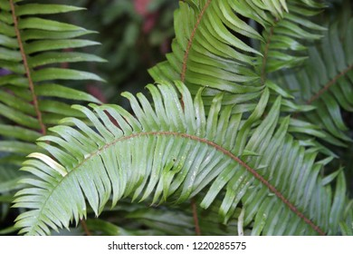 Fern fronds after rain