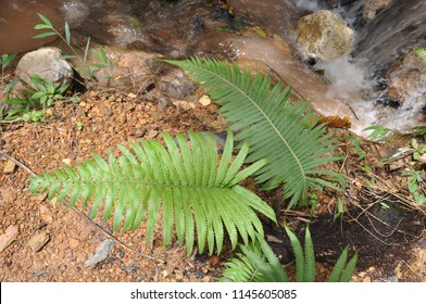 Fern in front of waterfall