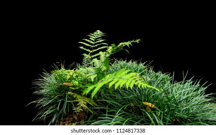 Fern and grass isolated on black background