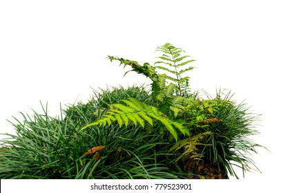 Fern and grass isolated on white background