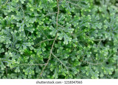 fern green natural background