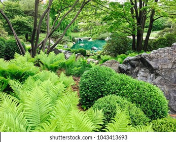 Fern growing in a beautiful green garden with a turquoise pond.