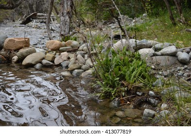 Fern growing wild besides the river with stones and forest background in a cloudy day