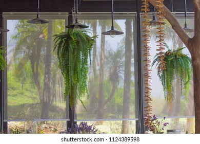 Fern indoor plants and nature outside glass wall with curtains closed.