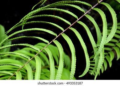 fern leaf closeup.