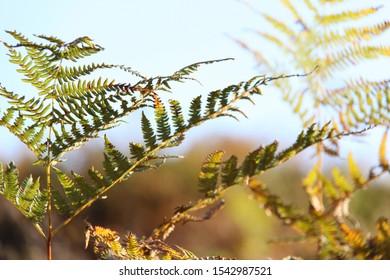 fern leaf closeup against blue sky