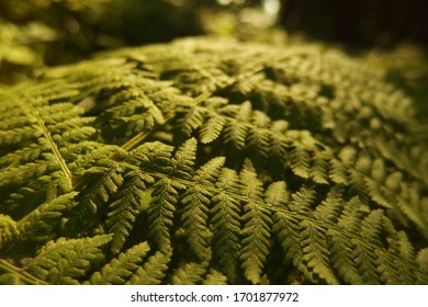 Fern leaf in forest close-up look