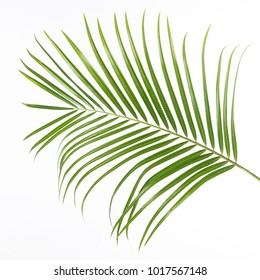 fern leaf isolated in front of white background