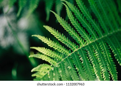 Fern Leaf isolated on nature background in sunlight