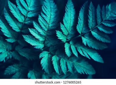 fern leaf - natural background natural full screen