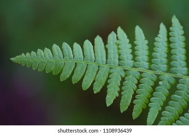 fern leaf on blurry background