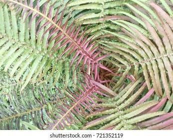 Fern leaf top view background