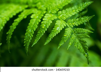 Fern leaf with water drops close-up