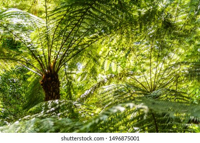 fern leafs in the backlight