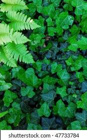 fern leafs with english ivy
