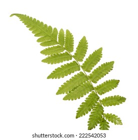 Fern leave, on white background