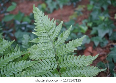 Fern leaves with background of forest floor