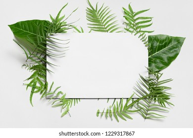 Fern leaves with copy space for text
