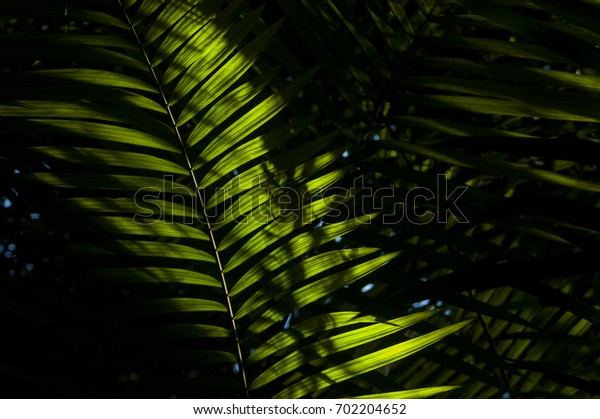Fern leaves in the evergreen forest