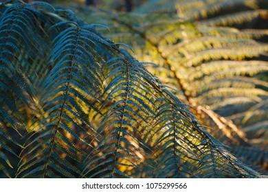 Fern leaves fresh green plant background