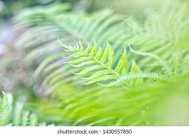 fern leaves as a green background