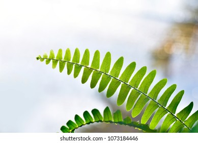 Fern leaves in the sun. Natural floral fern background in sunlight. Perfect natural fern pattern. Beautiful background made with young green fern leaves. Beautiful bokeh background.