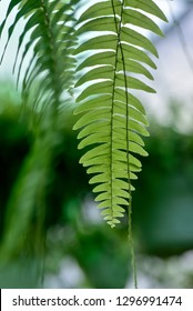 fern leaves in the sun. Natural floral fern background in sunlight. Perfect natural fern pattern. Beautiful background made with young green fern leaves. Beautiful bokeh background. DOF.