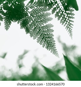 Fern leaves in the sun. Natural floral fern background in sunlight. Perfect natural fern pattern. Beautiful background made with young green fern leaves. Beautiful bokeh background