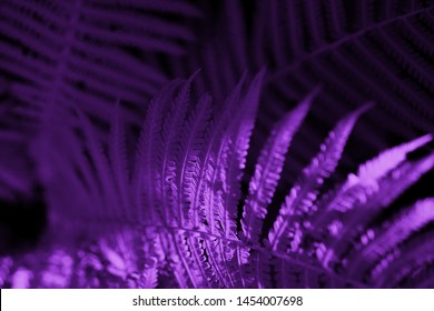 Fern leaves toned purple, modern fantasy background. Creative background for websites, banners, wallpaper