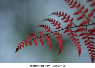 Fern leaves in a tropical forest.