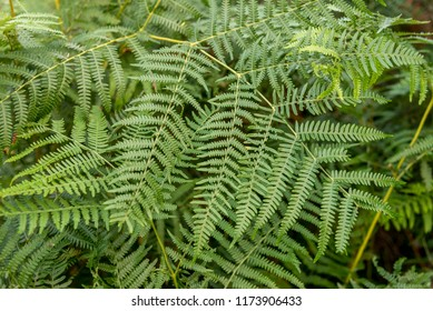 A fern is a member of a group of vascular plants that reproduce via spores and have neither seeds nor flowers. Photo taken in Lake District - United Kingdom