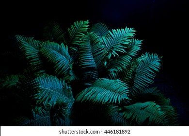 Fern in the moonlight