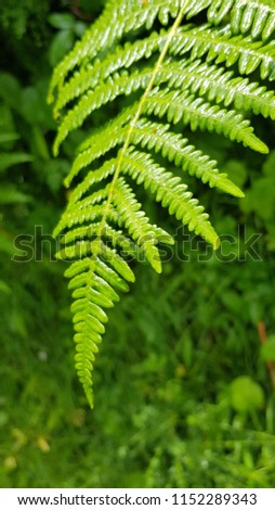 Fern in mountain