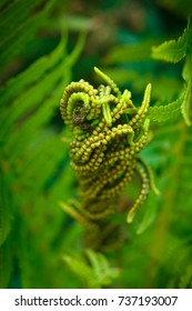 fern on the background of greenery