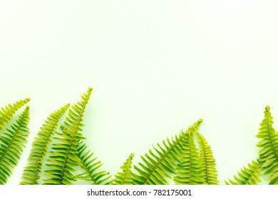 fern on green background