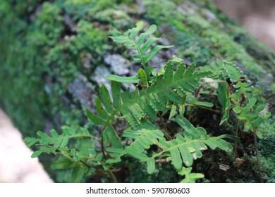 fern on a mossy log