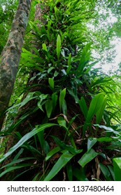 fern on tree in rainforest