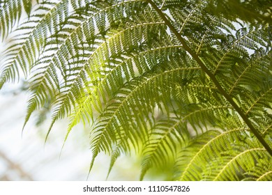 Fern plant abstract background