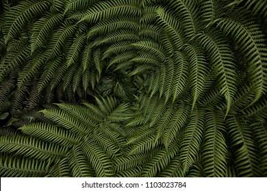 Fern Plant Macro
