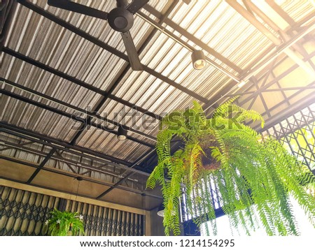 Fern Plant Pot Hanging On Ceiling Stock Photo Edit Now 1214154295